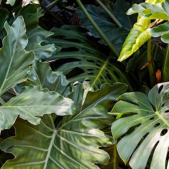Exotisches grün und pflanzen