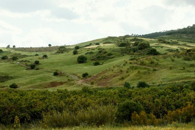 Extra lange schuss friedliche landschaft mit bäumen