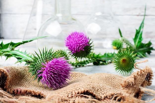 Extrakt aus heilpflanzen