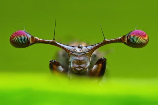 Extrem vergrößerte details der vorderansicht der stiel musterten fliege im naturgrünblatt