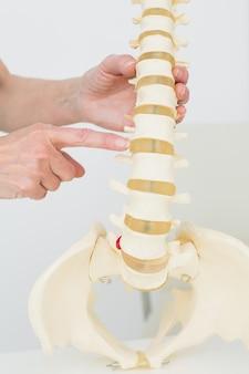 Extreme nahaufnahme eines fingers, der auf skeleton modell zeigt