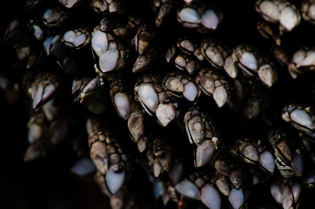 Extreme nahaufnahme makrofotografie von felsigen texturen