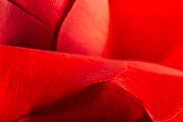 Extreme nahaufnahme von schönen roten rosafarbenen blumenblättern