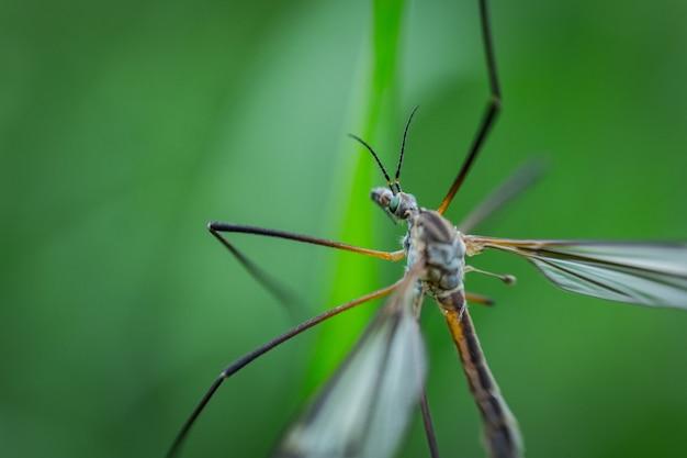 Extreme nahaufnahmeaufnahme einer libelle, die auf einer pflanze in einem wald sitzt