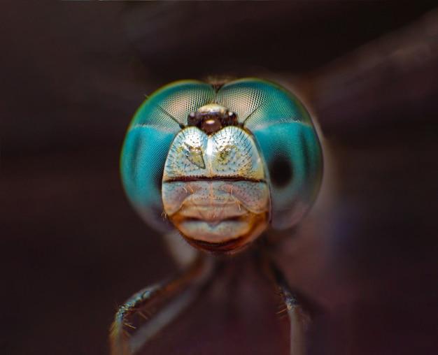Extremes makroschussauge der blauen libelle in wildem.
