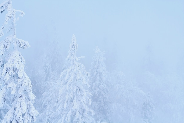 Fabelhafter weihnachtswinterwald schneien alles