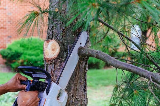 Fachmann schneidet bäume unter verwendung einer kettensäge