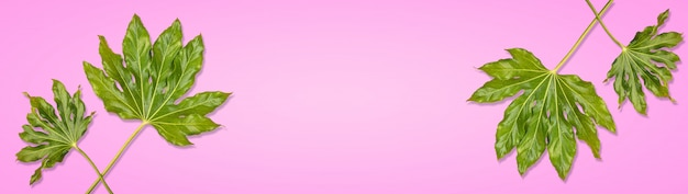 Fahne von grünen tropischen blättern mit regentropfen auf rosa hintergrund