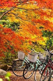 Fahrrad am roten ahornbaum, japan-herbstsaison.