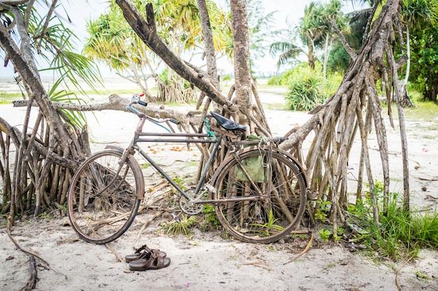Fahrrad am strand baum