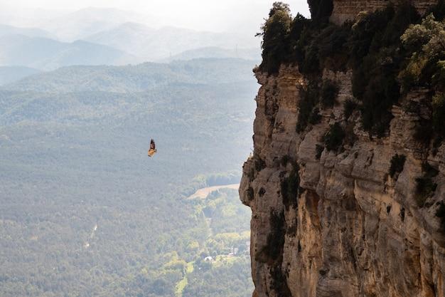 Falke, der nahe einem hohen felsen fliegt