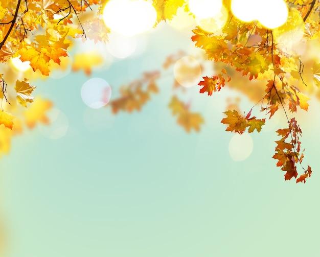 Fallen sie gelbe und orange ahornblätter auf hintergrund des blauen himmels
