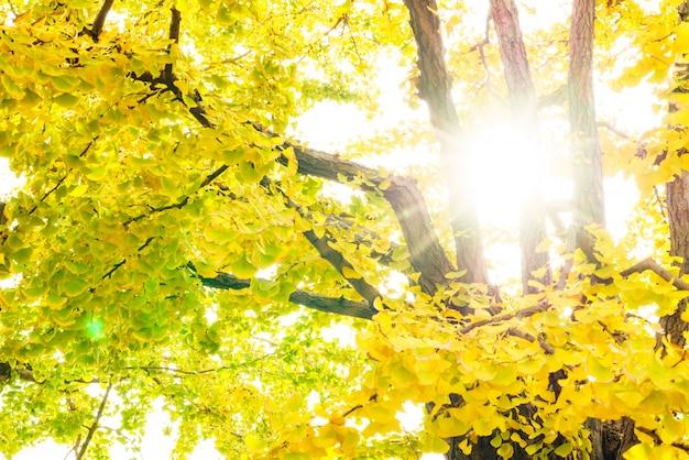 Fallen sonnenstrahlen wald park ruhig