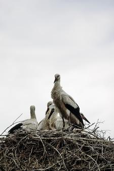 Familie der störche im nest