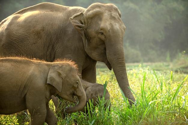 Familie des asiatischen elefanten mit dem netten baby, das durch die wiese geht.