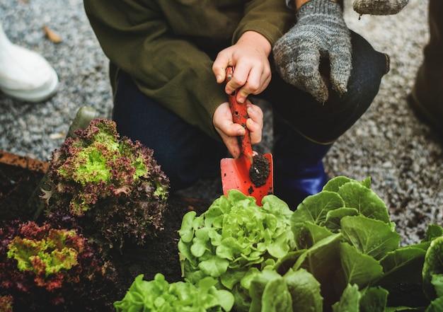 Familie, die gemüse vom hinterhofgarten pflanzt