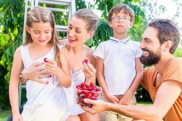 Familie, die kirschen im garten erntet und isst