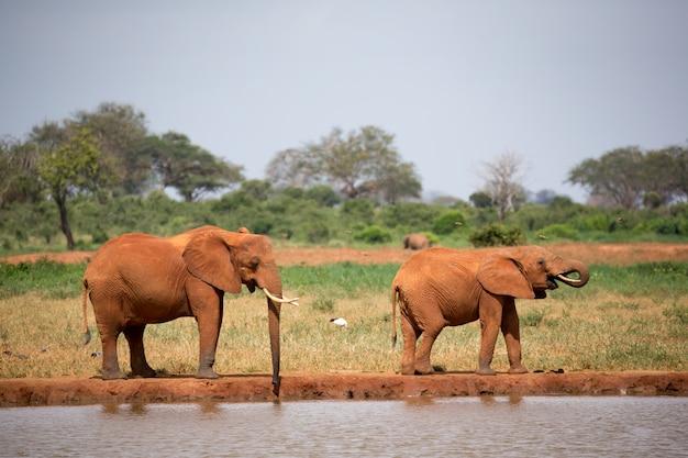 Familie von elefanten, die wasser vom wasserloch trinken