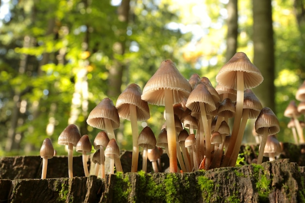 Familie von pilzen auf einem baumstamm