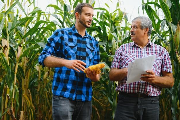 Familienbetrieb. bauernvater und -sohn arbeiten in einem maisfeld. landwirtschaftskonzept.