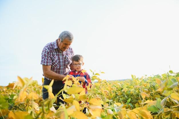 Familienbetrieb. großvater der landwirte mit kleinem enkel auf sojabohnenfeld der großvater unterrichtet den familienbetrieb des enkels.