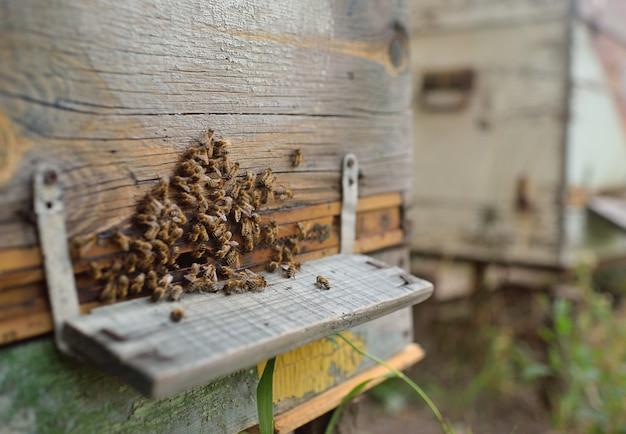 Familienbienennahaufnahme auf hölzernem hintergrundbienenstock