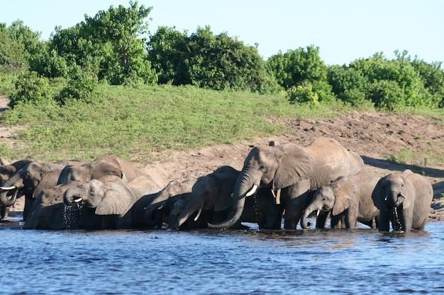 Familienfeld mit elefanten