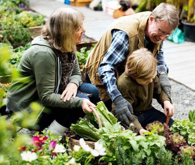 Familiengartenarbeit, die draußen draußen transplantiert