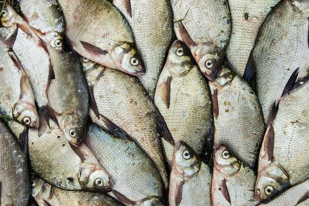 Fang von flussfischen aus dem splitter