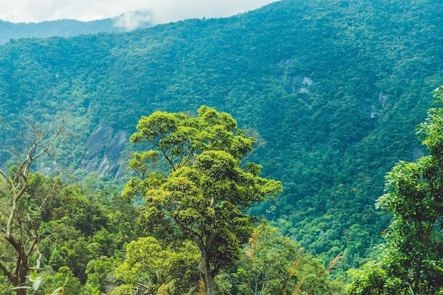 Fantastische landschaft von dalat bergen vietnam nam frische atmosphäre villa zwischen wald