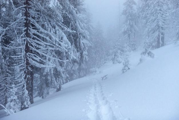 Fantastische winterlandschaft. am vorabend des urlaubs. die dramatische szene. karpaten, ukraine, europa. frohes neues jahr