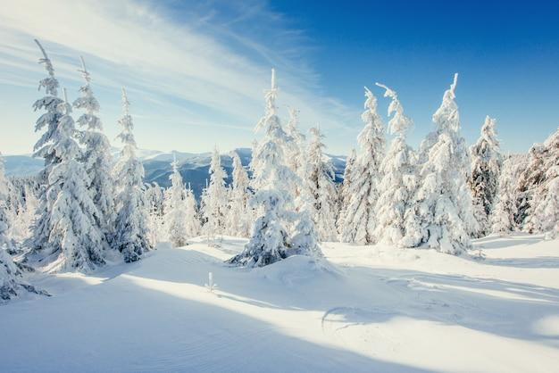 Fantastische winterlandschaft in den bergen der ukraine