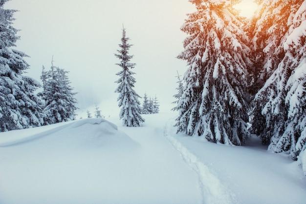 Fantastische winterlandschaft und ausgetretene pfade, die in die