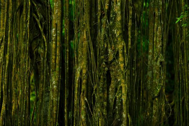 Fantastischer tropischer wald mit erstaunlichen tropischen pflanzen