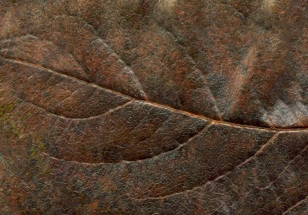 Farbbaumblatt-makrobeschaffenheit. abstrakter herbstblatthintergrund