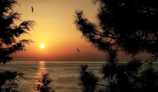 Farbe sonnenaufgang im waldgebiet des schwarzen meeres. sommerlandschaft in leuchtenden farben hinter kiefernzweigen. wacholderhain im morgengrauen auf der krim. blick von den bergen auf das ruhige meer. erstaunlicher tourismus in russland