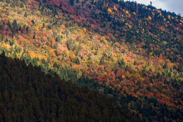 Farbenfroh im herbstlichen wald und im schneeberg im naturschutzgebiet yading, dem letzten shangri la