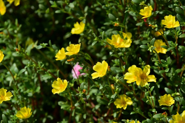 Farbenfrohe blumen. gruppe von blumen. schöne blumen im garten blühen im sommer.