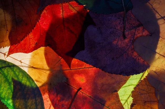 Farbige herbstblätter. hintergrund für design