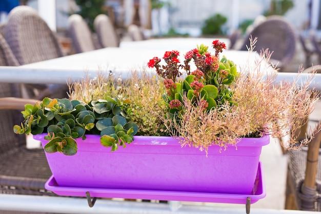 Farbige topfpflanzen. verschiedene topfpflanzen und setzlinge