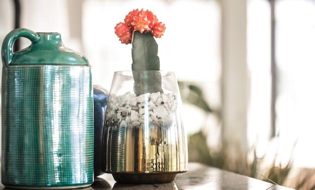 Farbige vasen und kakteen im inneren des cafés. oststil. komfort und stil