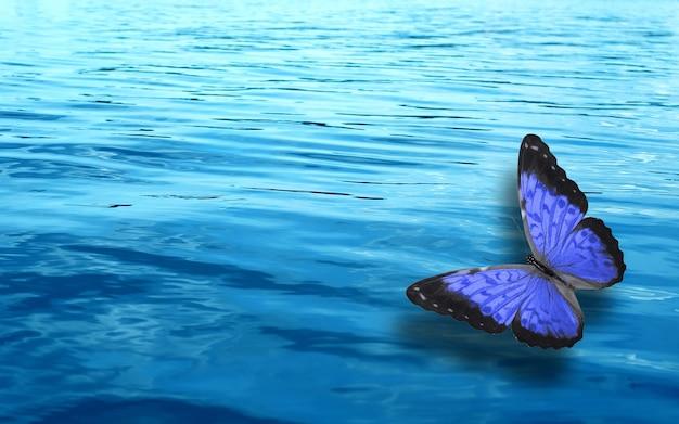Farbiger tropischer schmetterling auf einem hintergrund von blauem wasser