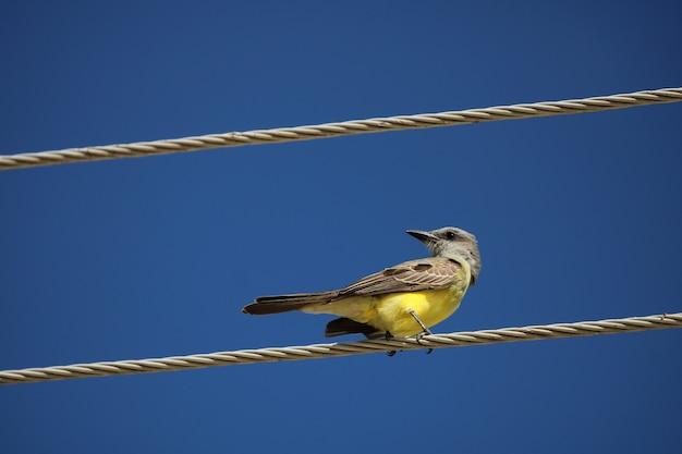 Farbiger vogel auf draht