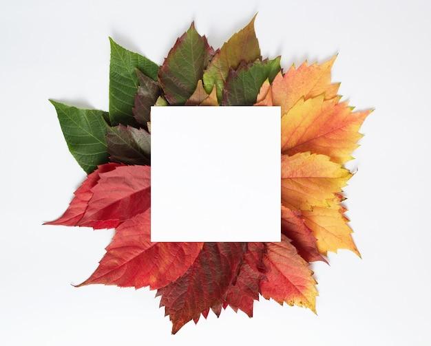 Farbiges herbstlaub. kreatives konzept des jahreszeitenwechsels. quadratische weiße karte für kopierraum minimale natürliche zusammensetzung.