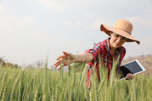 Farmer gerste ernte feld plantage überprüfung der qualität neuer gerstensorten durch tablette landwirtschaft moderne technologie konzept.