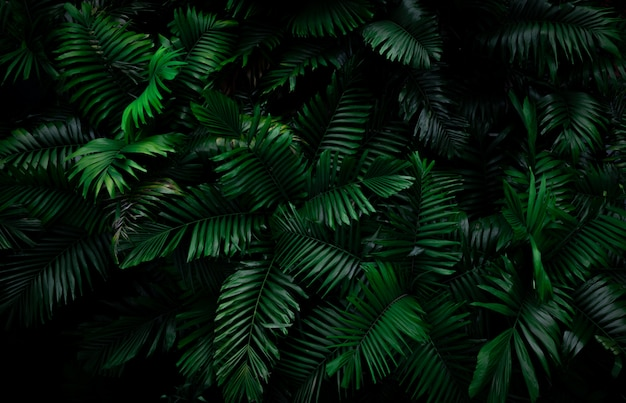 Farn verlässt auf dunklem hintergrund im dschungel. dichte dunkelgrüne farnblätter im garten bei nacht. abstrakter hintergrund der natur. farn im tropischen wald. exotische pflanze.