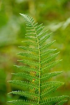 Farnblatt in der herbstsaison in der natur