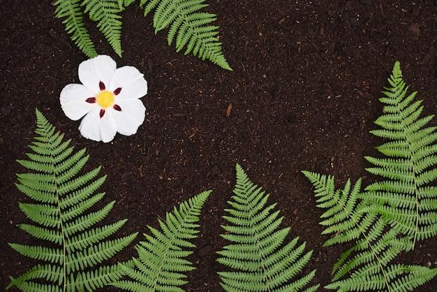 Farne und steinrose blühen