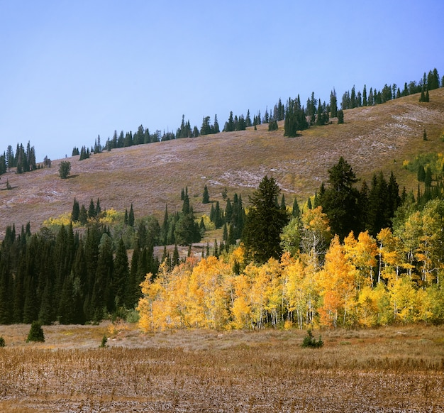Faszinierende ansicht der bunten bäume nahe den hügeln im herbst