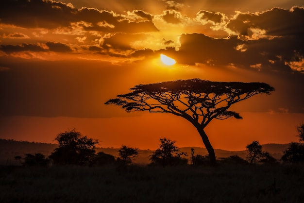 Faszinierende ansicht der silhouette eines baumes in den savannenebenen während des sonnenuntergangs